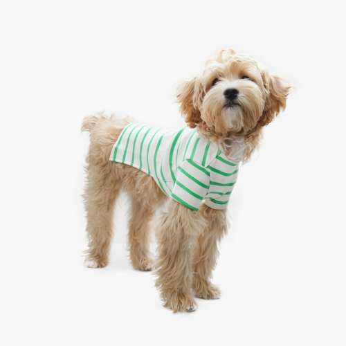 Casual Stripe T-shirt Green